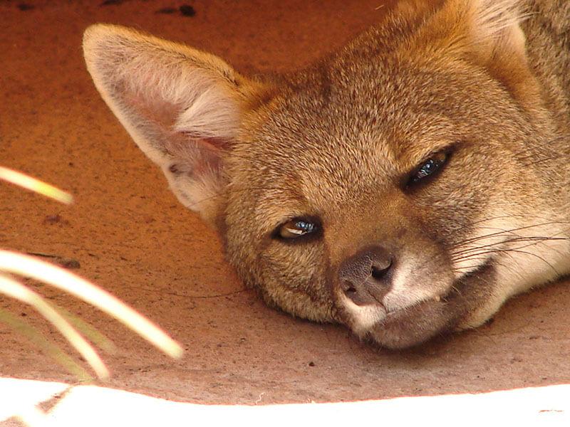Criadouro Conservacionistade Animais Silvestres